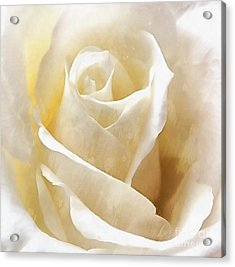 Acrylic Print featuring the photograph Forever More - Ivory Rose by Janine Riley