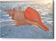 Acrylic Print featuring the photograph Forever Sanibel by Melanie Moraga