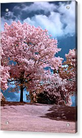Forever Spring Acrylic Print
