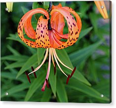 Forevermore Acrylic Print