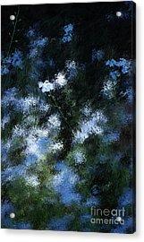Forget Me Not Acrylic Print by David Lane