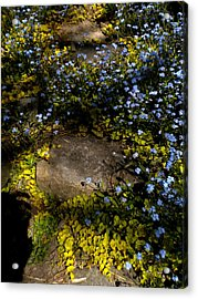 Acrylic Print featuring the painting Forget-me-nots 1 by Renate Nadi Wesley