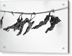 Forgotten Acrylic Print by Gabriela Insuratelu