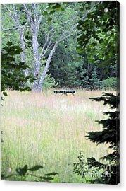 Forgotten Picnic Table Acrylic Print by Elizabeth Dow