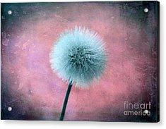 Forgotten Wishes Acrylic Print by Krissy Katsimbras