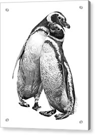 Forrest And Jenny The Penguins Acrylic Print
