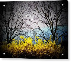 Forsythia By The Mountains Acrylic Print by Joyce Kimble Smith