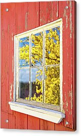 Acrylic Print featuring the photograph Forsythia Reflection 1 by Brian Hale