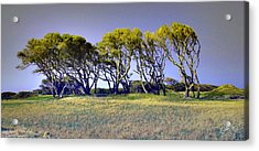 Acrylic Print featuring the photograph Fort Fisher Trees by Phil Mancuso