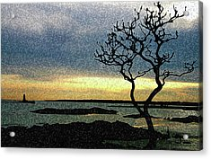 Fort Foster Tree Acrylic Print