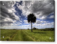 Fort Moultrie Palm  Acrylic Print by Dustin K Ryan