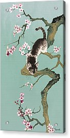 Fortune Cat In Cherry Tree Acrylic Print