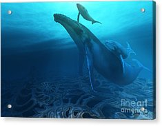 Fossils Acrylic Print by Corey Ford