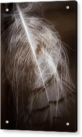 Found Feather Acrylic Print
