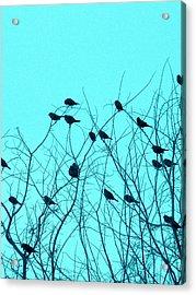 Four And Twenty Blackbirds Acrylic Print