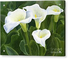 Four Calla Lily Blossoms With Leaves Acrylic Print