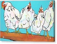 Four Clucks II Acrylic Print