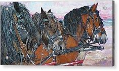 Four Draft Horses Acrylic Print