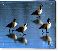 Four Geese Walking On Ice Acrylic Print
