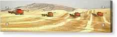 Four Headed In 7013 Acrylic Print