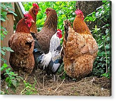 Four Hens And A Rooster Acrylic Print