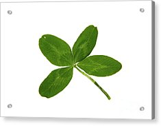 Four Leaf Clover Acrylic Print by Photo Researchers