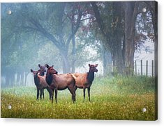 Acrylic Print featuring the photograph Four Of A Kind by James Barber
