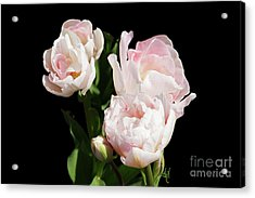 Four Pink Tulips And A Bud On Black Acrylic Print