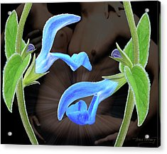 Four Play Acrylic Print by Torie Tiffany