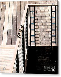 Four Swallows Acrylic Print by Gary Everson