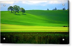 Four Trees On Livermore Road Acrylic Print