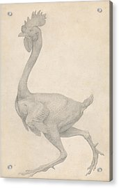 Fowl, Lateral View With Most Feathers Removed  Acrylic Print by George Stubbs