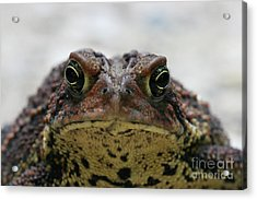 Fowler's Toad #3 Acrylic Print