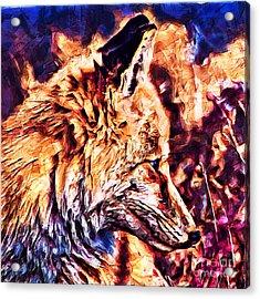 Fox 3 Acrylic Print