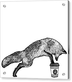 Fox Drinking Coffee Acrylic Print by Karl Addison