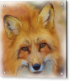 Fox Face Taken From Watercolour Painting Acrylic Print