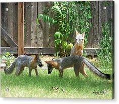 Fox Family Acrylic Print
