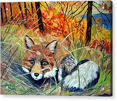 Fox-   Fox In Hiding Acrylic Print by Julie Brugh Riffey
