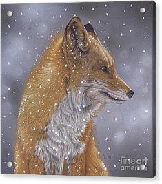 Fox In A Flurry Acrylic Print