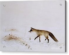 Fox In Snow Acrylic Print by Jane Neville