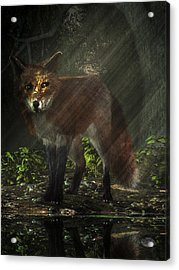 Fox In The Deep Forest Acrylic Print by Daniel Eskridge