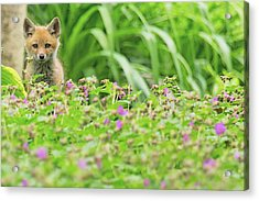 Fox In The Garden Acrylic Print by Everet Regal