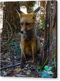 Fox Joy  Acrylic Print