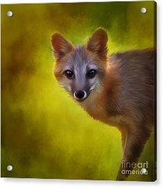 Fox Painting Acrylic Print