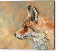 Fox Portrait Acrylic Print by David Stribbling
