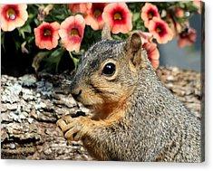 Fox Squirrel Portrait Acrylic Print
