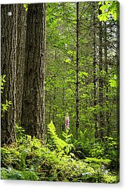 Acrylic Print featuring the photograph Foxglove In The Woods by Jean Noren
