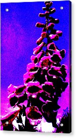 Acrylic Print featuring the painting Foxglove by Renate Nadi Wesley