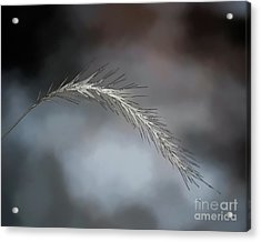 Acrylic Print featuring the photograph Foxtail - Abstract Art by Kerri Farley