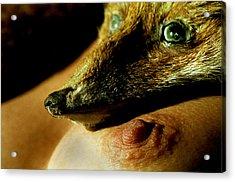 Foxy Lady Acrylic Print by Michael Mogensen